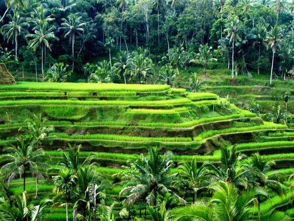 Mengenal Kepemilikan Tanah Absentee